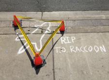 [馬路故事] 當一隻 浣熊 路倒在多倫多街頭……
