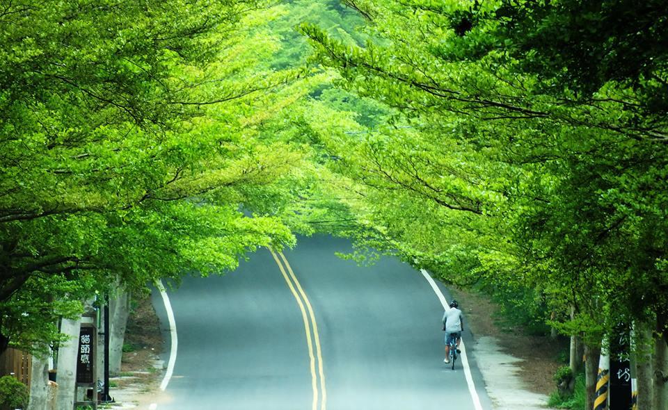 八卦山公路綠色一角